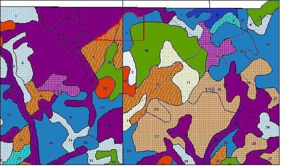 План лесонасаждений и расположение демонстрационного полигона 117 и 118 кварталов Занульского лесничества