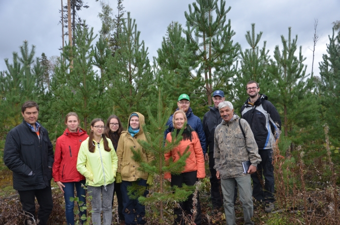 Improvement thinning in young pine forest at Mondi Syktyvkar's intensive forestry testing grounds