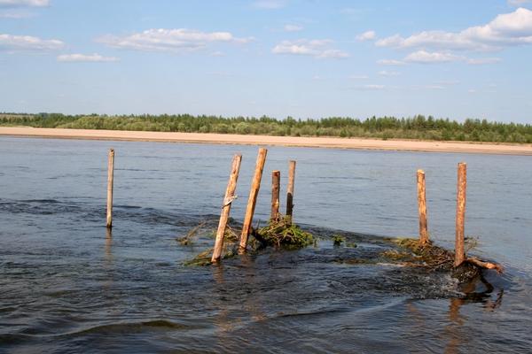 Illegal fences for salmon fishing, Mezen River